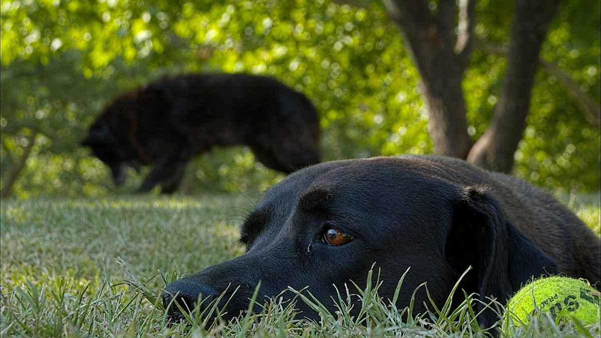 犬犬風塵 電影劇照